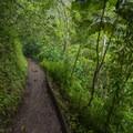 Mānoa Falls Trail.- Mānoa Falls Hike