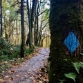Blue blazed markers are found every quarter-mile.- Wildwood Trail