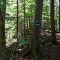 Trail options. The scenic trail follows the brook.- Gill Brook Trail