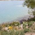 Wildflowers on the shores of Lake Tekapo.- Lake Tekapo + Church of the Good Shepherd