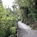 The trail to Hokitika Gorge is very well maintained.- Hokitika Gorge