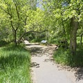 The path down to the springs.- Cascade Springs