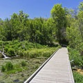 Boardwalks line the springs.- Cascade Springs