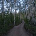 The four-wheel drive road to the Upper Trailhead.- Mount Elbert East Ridge Hike