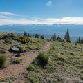 Looking back at treeline on the grassy ridge.- Mount Elbert East Ridge Hike