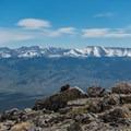 A marmot enjoying the view.- Mount Elbert East Ridge Hike