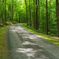 Road to the north-end campsites.- Mount Ascutney State Park Campground