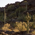 Sun setting on the saguaros.- Fat Man's Pass via National Trail
