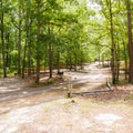 The campground area.- Big Hill Pond State Park