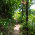 The beginning of the Park Trail near the boat launch.- Big Hill Pond State Park