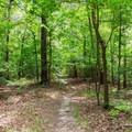 On the Big Hill Pond Trail.- Big Hill Pond State Park