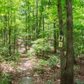 Heading south on Big Hill Pond Trail.- Big Hill Pond State Park