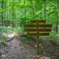 The crossing sign of three of the main trails.- Big Hill Pond State Park