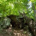 A rock that looks like petrified wood.- Big Hill Pond State Park