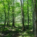 Looking southwest at the cypress tree grove.- Big Hill Pond State Park