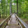 A boardwalk.- Big Hill Pond State Park