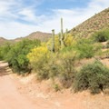 Upper Burnt Corral is accessible only by dirt roads.- Upper Burnt Corral Recreation Site
