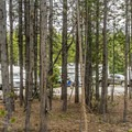 Loops are separated by strips of pine forest.- Fishing Bridge RV Park