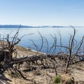 Yellowstone Lake.- Pelican Creek Trail