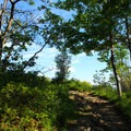 The trees opening up to Little Stony Man Cliffs.- Stony Man via Little Stony Man Trail
