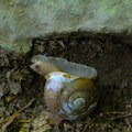 The trail is home to many woodland creatures, like the snail.- Stony Man via Little Stony Man Trail