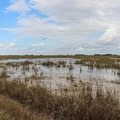 A view of the Everglades.- Shark Valley Visitor Center