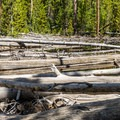 Massive log jams of lodgepole pine trunks are frequent.- Ribbon Lake Trail