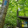 The Hell Brook Trail is marked by a blue blaze.- Mount Mansfield via Hell Brook + Long Trails