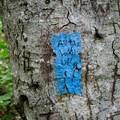 A blue blaze.- Mount Mansfield via Hell Brook + Long Trails