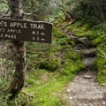 A trail intersection with the Adam's Apple Trail. It's worth the detour.- Mount Mansfield via Hell Brook + Long Trails