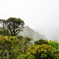 It is not uncommon for the summit to be shrouded in clouds.- Mount Ka'ala