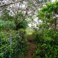 Once on the ridge, follow the fence up!- Mount Ka'ala