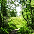 The Red Trail travels through beautiful deciduous forest.- Red Trail
