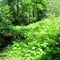 An old plant-covered dune.- Red Trail