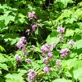 Unidentified wildflowers (help us by providing feedback).- Red Trail