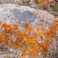 A conglomerate rock with lichen.- Little Black Mountain