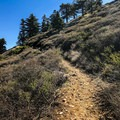 The trail meanders up a few switchbacks before assuming a gentle uphill grade.- Mount Islip from Islip Saddle