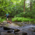 A hiker crosses a small creek.- Ricketts Glen State Park