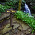 A trail marker along the Falls Trail.- Ricketts Glen State Park