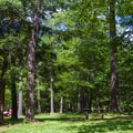 A wooded area with picnic tables and small grills.- Ricketts Glen State Park