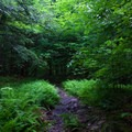 An unmarked trail leading to the Falls Trail.- Ricketts Glen State Park