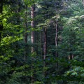 A view into the woods from the Falls Trail.- Ricketts Glen State Park