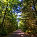 A dirt road leading to the Boulder Field.- Hickory Run State Park