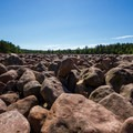 The Boulder Field on a hot summer day.- Hickory Run State Park