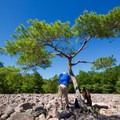 A family rests under a lone tree at the Boulder Field.- Hickory Run State Park