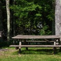 A picnic table and grill at the edge of a field.- Hickory Run State Park
