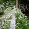 The bridge leading to Moss Glen Falls.- Moss Glen Falls