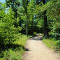 Big Meadow Trail leads down to the beach.- Fossil Beach