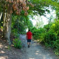 The trail opens up to the beach.- Fossil Beach