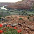 Wildflowers overlooking the Colorado River.- Colorado River: Ruby Horsethief Canyon